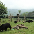 A Day in the Life of the Vietnam Bear Rescue Centre