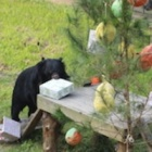 12 Vines that show how much bears love Christmas