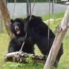 Fun with your moon bear friend – it's as easy as falling off a swing