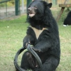 These pictures prove moon bear Bradley's still a cub at heart