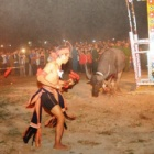 Animals Asia pig slaughter campaign ends buffalo stabbing festival
