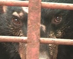 Statement on bear bile usage to treat Covid-19