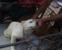 China's dog meat restaurants on the back foot as public clamour to report illegality