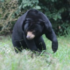 It's not lonely at the top – it's just how sun bear Dorle likes it