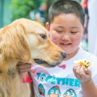 International Assistance Dog Week: How I've seen therapy dogs change lives for the better