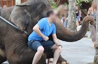 Don't be fooled into elephant abuse