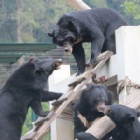 Sanctuary life captured in this classic shot of four rescued bear pals