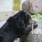 After years caged on a bile farm – see Gizmo taste freedom
