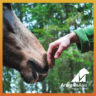 One Life: World Horse Protection Day