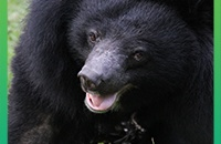 Go deeper with our vets and see inside rescued moon bear Isabella