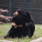 Cuddles in the sun show rescued bear finally has the family he's always wanted