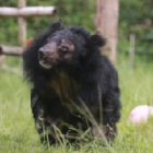"VIDEO: Watch Kay ""the most beautiful bear in the world"" beat her demons"