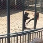 Animal performance suspended at zoo as Chinese demand change