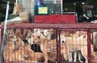 Dog meat in South Korea: Has infamous Moran Market really closed?