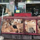 Killing dogs for meat declared illegal in South Korea – what can China learn?
