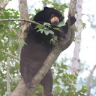 Sun bear was devastated when best friend died but now she's fighting back