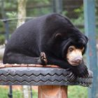 Miomojo Cub House: The tragic sign which shows this orphaned bear will always miss her mum