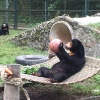 VIDEO: These four sun bear orphans finally have the family they've always wanted