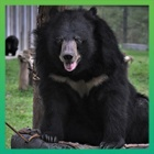 Together, we are making Moon Bear Day 2020 the biggest and best yet!