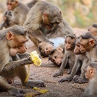 In macaque society, friends are wealth and increase chances of a long happy life