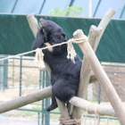 Moon bear Maggie is singing in the rain