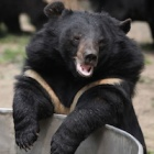 Hero vets save rescued bear suffering from life-threatening spinal injury