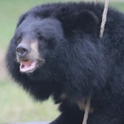 Rescued bear needed one simple toy to make her afternoon perfect