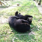 These orphaned bears had the worst start to life – but look at them now