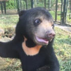 Watch: sun bear Murphy's first year — they grow up so fast!