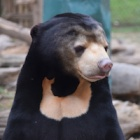 Miomojo Cub House: meet the orphaned bears growing up with unconditional love