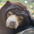 How did rescued bears spend the holidays?