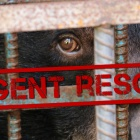 BREAKING: Rescue of five moon bears happening right now in Vietnam