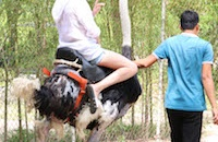 Foreign tourists fuelling animal cruelty in Vietnam's tourism industry