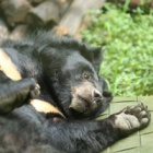 #Moonbearmonday: Panja's enduring strength
