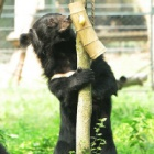 From bile farm to absolute babe – the story of Peter Bear