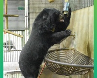 Pioneering Bear Physiotherapy trial outstanding success!