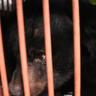 Gorgeous rescued bear is safe and now has her first real name: Precious