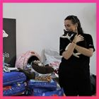 During recent Vietnam floods, Animals Asia came to the rescue of shelter, home to over 100 cats and dogs