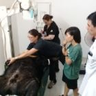 "Limping rescued bear prompts trip to ""human hospital"""
