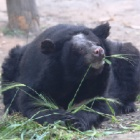 He rubbed his face away on the bars that caged him - now this bear is smiling in the sun
