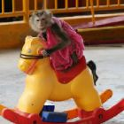 TAKE ACTION: Help Queenie - a sad, damaged, terrified macaque that's forced to perform