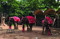 Relief for animals as prestigious Vietnamese zoo quietly ends cruel elephant performances