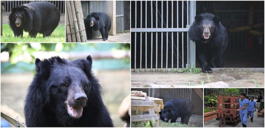 Six bears' long road to recovery