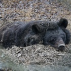 These sleepy bears are the cutest thing you'll see today