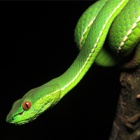 #WorldSnakeDay: Cold-blooded killers, yes – but new research reveals a maternal side