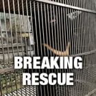 BREAKING: Emergency bear bile farm rescue underway in Vietnam