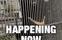 TIMELINE: #AbandonedBearRescue - Happening Now!
