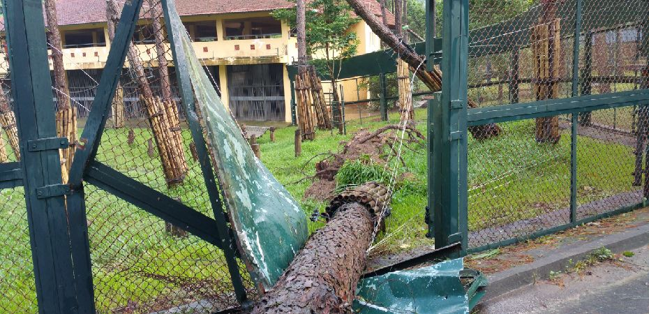 Rescued bears stuck inside after storm damages sanctuary