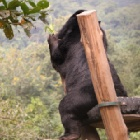 Rescued moon bears reveal their favourite sanctuary hideaways