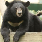 #Moonbearmonday: That's Thao